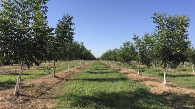 Autorizații de plantare - defrișare eliberate în primul trimestru al anului 2019